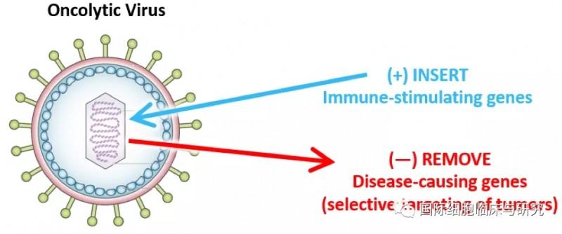 溶瘤病毒疗法T-VEC