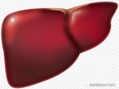 2020国际肝癌协会发声:索拉非尼难治性肝癌治疗方案有了