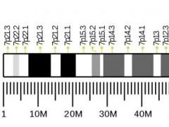 罕见基因突变,C-MET靶点基因融合突变,C-MET靶向药物,C-MET抑制剂有哪些,C-MET临床试验招募