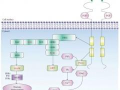 肝内胆管癌新药,口服靶向药,FGFR抑制剂靶向药Futibatinib(TAS-120),胆管癌临床试验ICP-192招募中