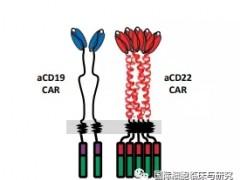 2020年ESMO大会双重靶向的CAR-T细胞免疫疗法AUTO3更安全长效