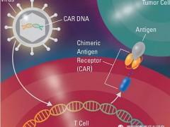 骨髓瘤新型CAR-T细胞免疫疗法Iecabtagene Vcleucel(Ide-Cel,BB2121)获优先审评,Claudin18.2临床试验招募中