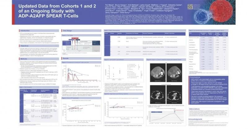 ADP-A2AFP治疗数据