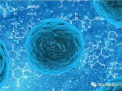 肝癌T细胞免疫治疗,T细胞免疫疗法ADP-A2AFP临床试验广受关注