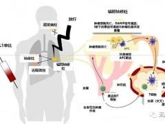 免疫联合治疗,免疫联合放疗,免疫联合疗法,免疫治疗联合放疗