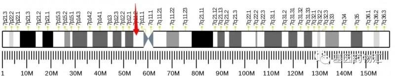 EGFR基因突变