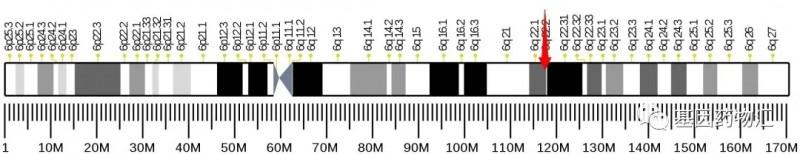 ROS1基因突变