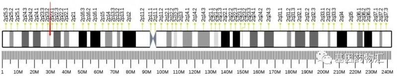ALK基因突变