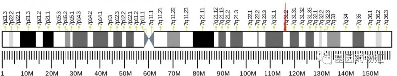 MET基因突变
