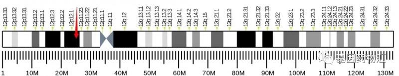 KRAS基因突变