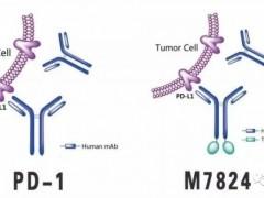 宫颈癌临床试验招募,PD-L1和TGFβ(贝塔)双靶点药物M7824临床试验招募进行中