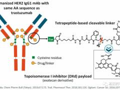 胃及胃食管交界处腺癌抗体偶联(ADC)药物Enhertu(DS-8201、Fam-Trastuzumab Deruxtecan-nxki)
