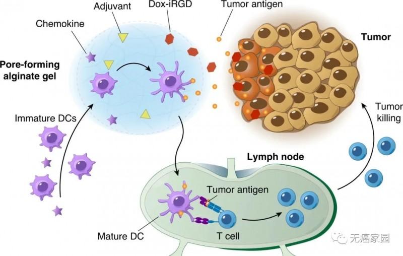 个体化肿瘤疫苗杀死癌细胞的过程