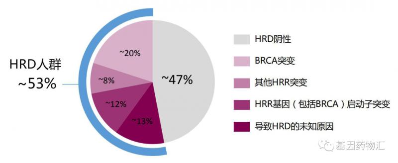 HRD人群占比