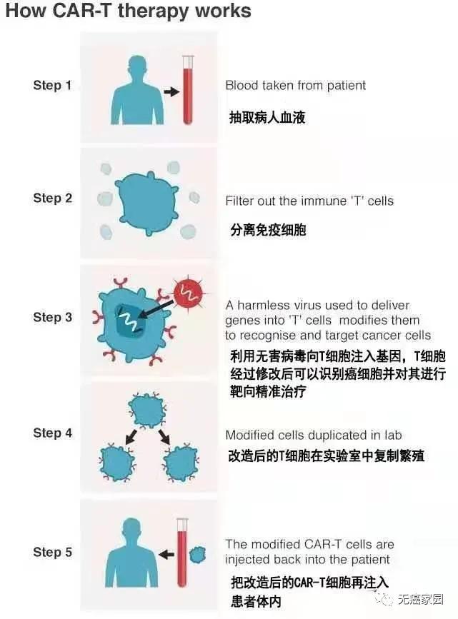 CAR-T免疫疗法的工作流程