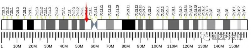 EGFR突变基因