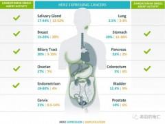 基因小课|HER2,最经典的癌症治疗靶标之一、广谱抗癌新秀HER2基因突变