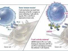 肺癌免疫疗法,第五款肺癌免疫(PD1)治疗药物,肺癌免疫抑制剂Cemiplimab(Libtayo)即将上市