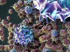 实体肿瘤针对MAGE-A4抗原的TCR-T细胞治疗,TCR-T细胞疗法ADP-A2M4 T细胞免疫疗法横空出世