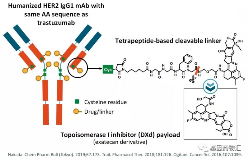 DS-8201分子结构