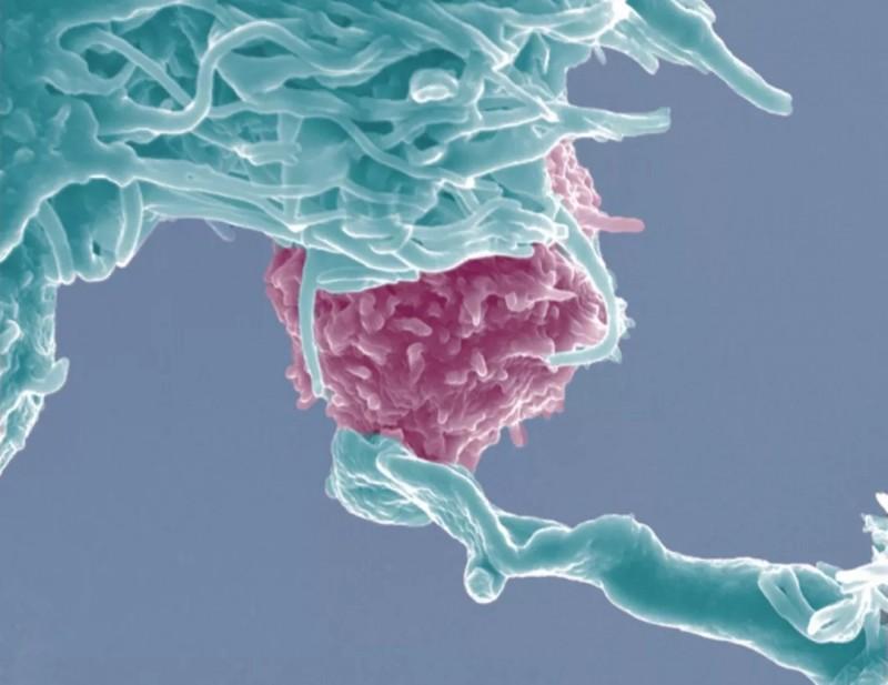 机体免疫机制