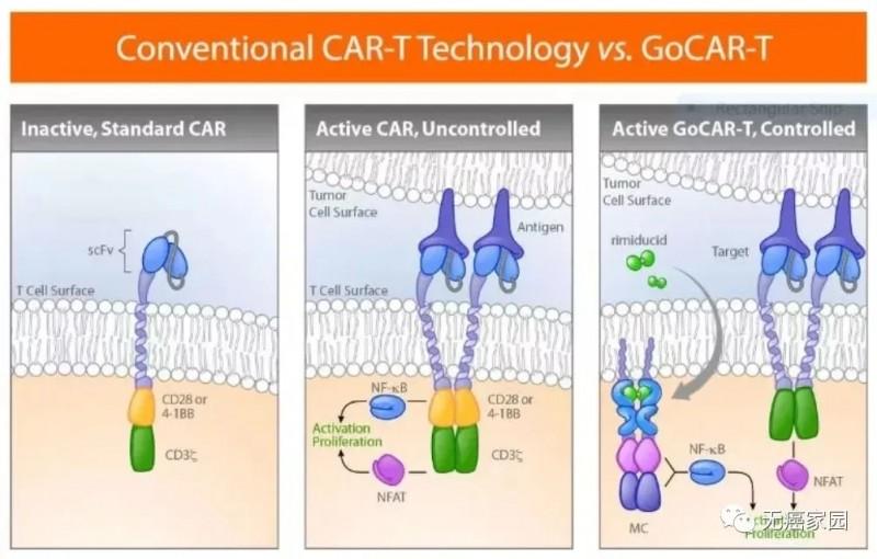 GoCAR-T技术让CAR-T细胞只有在小分子药物存在时才会被激活