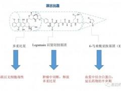 速递|胃癌新药,抗体-药物偶联物ADC药物ARX788获得FDA孤儿药称号
