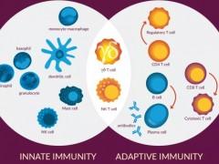 双特异性抗体γδ T细胞疗法开启癌症肿瘤细胞免疫治疗的新赛道