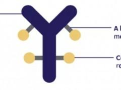 尿路上皮癌新药,抗体偶联(ADC)药物Padcev(Enfortumab Vedotin-ejfv)正式获批用于不适合接受含顺铂的方案化疗额局部晚期或转移性尿路上皮癌患者