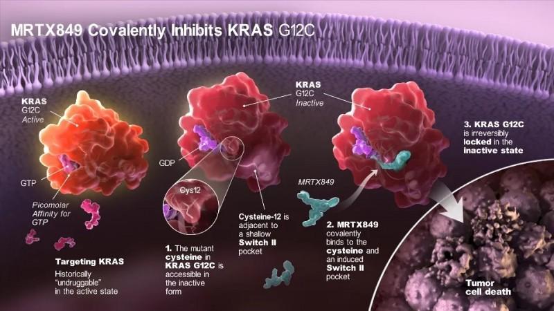 KRASG12C突变