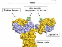 三阴乳腺癌临床试验招募,三阴乳腺癌靶向药,抗体偶联(ADC)药物ARX788临床试验招募正在进行中