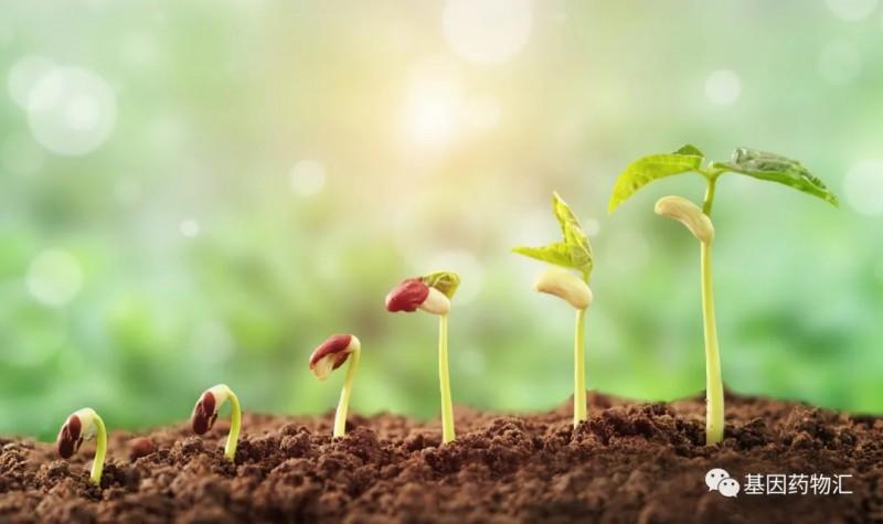 植物种子生长的过程