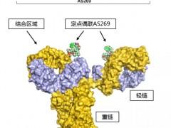 新码生物重组人源化抗HER2单抗-AS269偶联物(ARX788)HER2阳性乳腺癌临床试验II/III期招募整在进行中