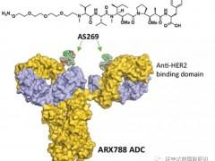 乳腺癌抗HER2靶向治疗药物,抗体偶联(ADC)药物ARX788疾病控制率100%,ARX788治疗HER2阳性的乳腺癌临床试验招募正在进行中