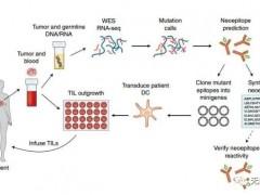 肿瘤免疫联合治疗,细胞免疫疗法联合PD-1免疫治疗,抗癌效果翻倍