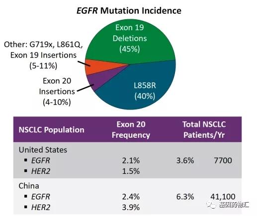 不同EGFR基因突变的概率