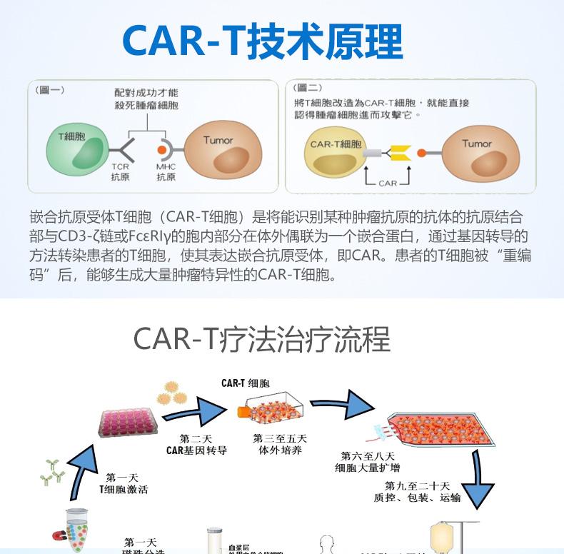 """嵌合抗原受体T细胞(CAR-T细胞)是将能识别某种肿瘤抗原的抗体的抗原结合部与CD3-ζ链或FcεRIγ的胞内部分在体外偶联为一个嵌合蛋白,通过基因转导的方法转染患者的T细胞,使其表达嵌合抗原受体,即CAR。患者的T细胞被""""重编码""""后,能够生成大量肿瘤特异性的CAR-T细胞。"""